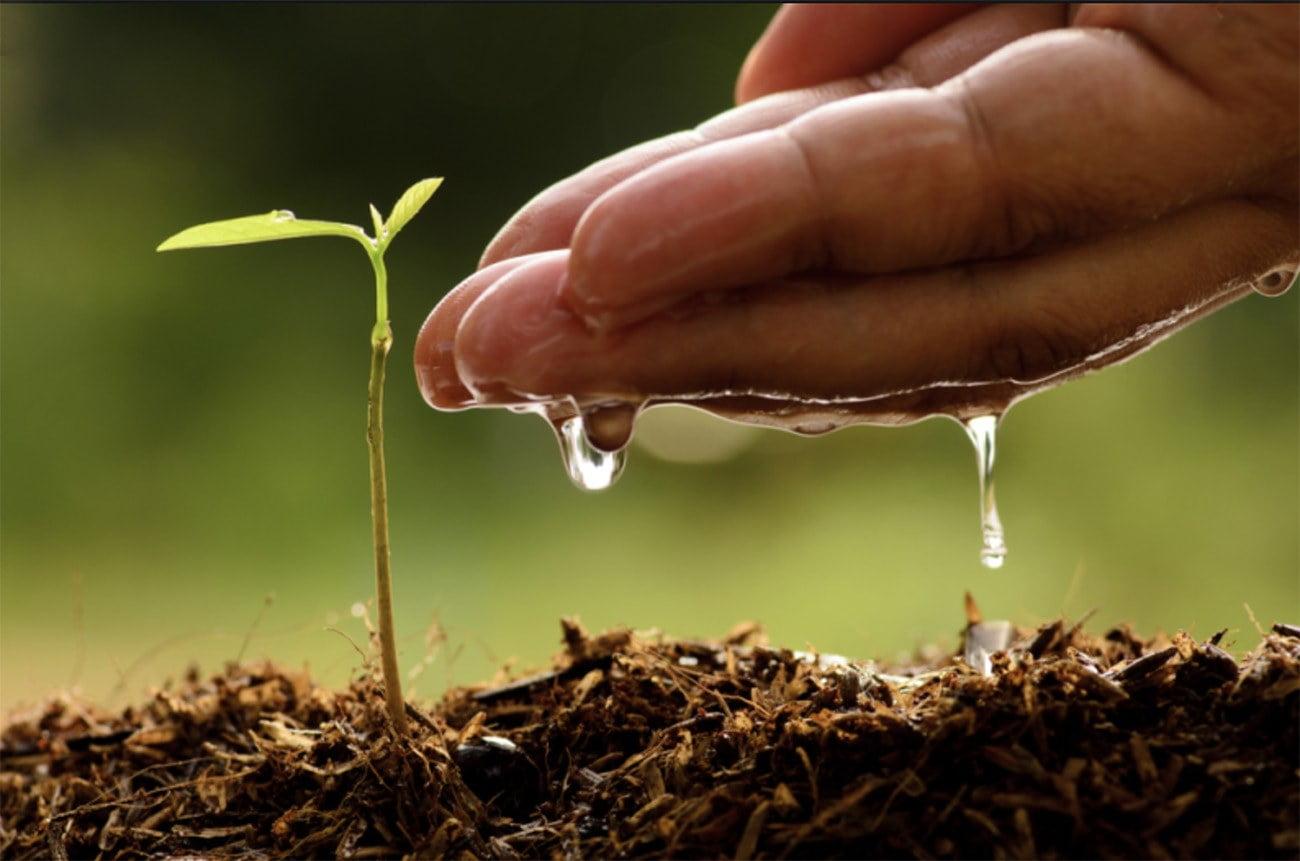 imagem alusiva à agricultura e meio ambiente