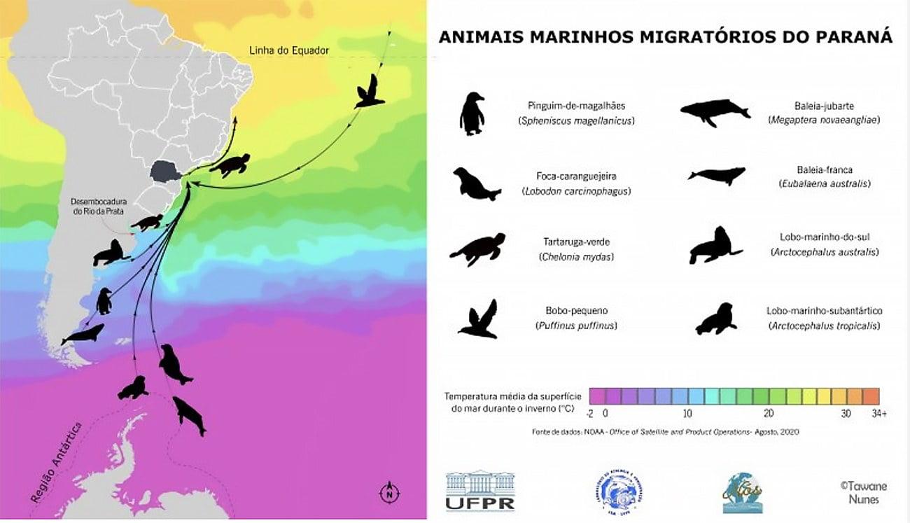 infográfico dos animais migratórios do Paraná.