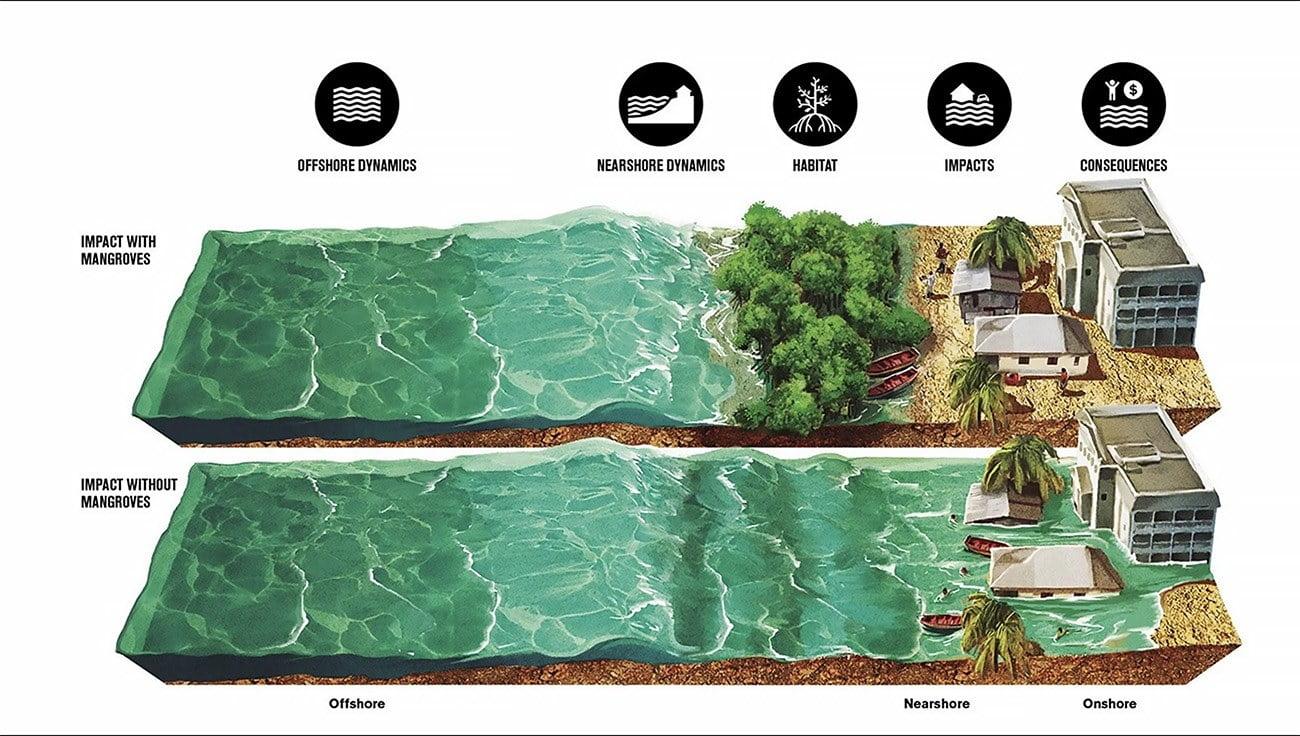 ilustração mostra a proteção da costa pelo manguezal