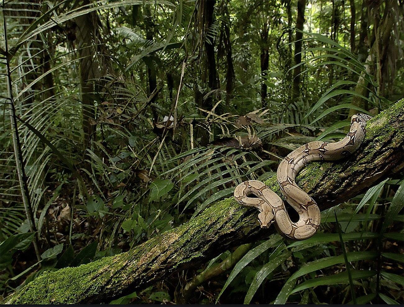 imagem de cobra na floresta da Amazonia