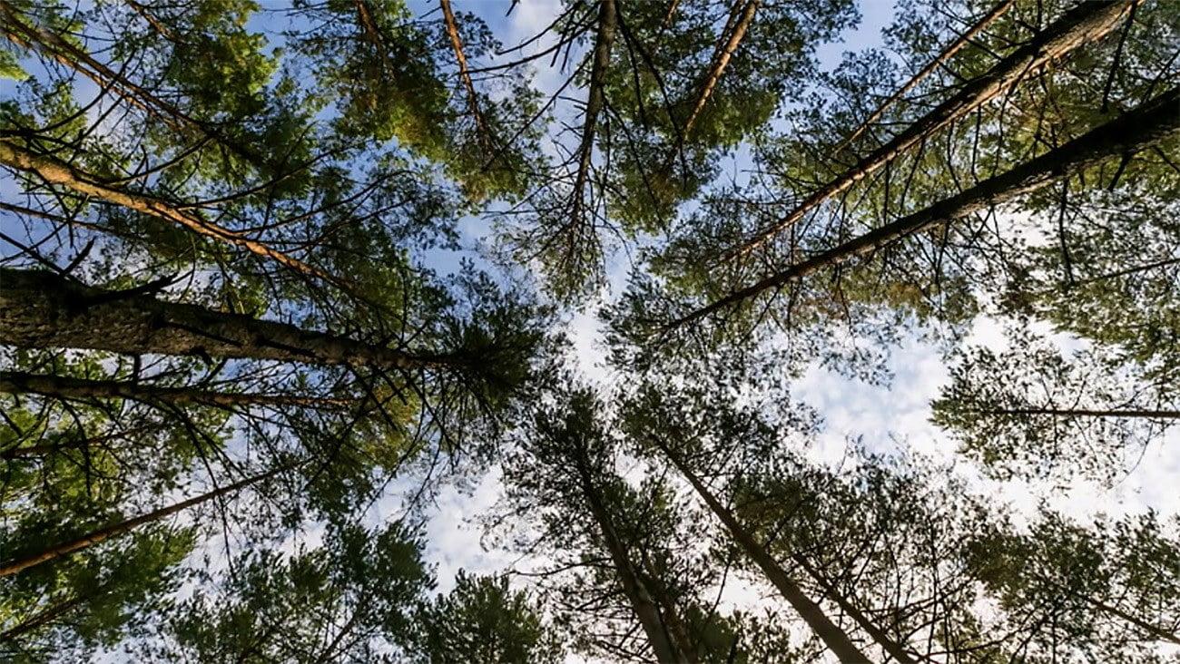imagem de floresta