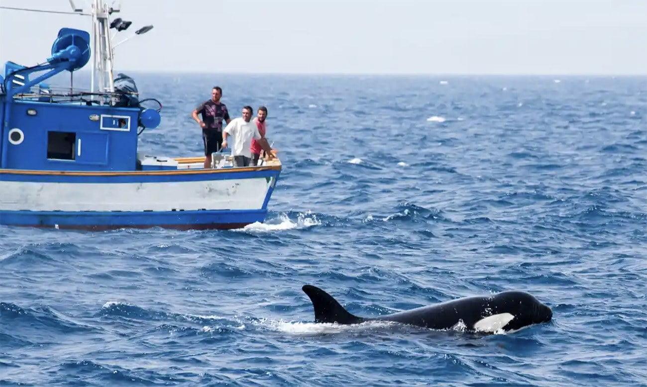imagem de orcas e barcos
