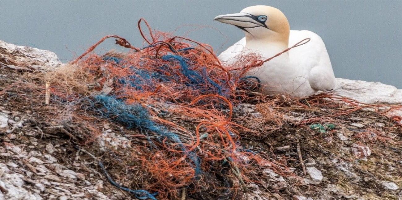 imagem de ave marinha e redes de pesca