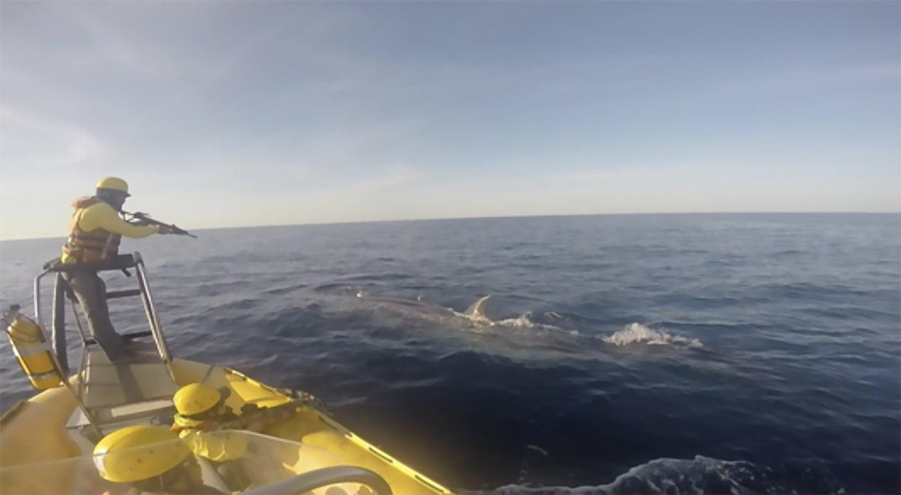 imagem de baleias
