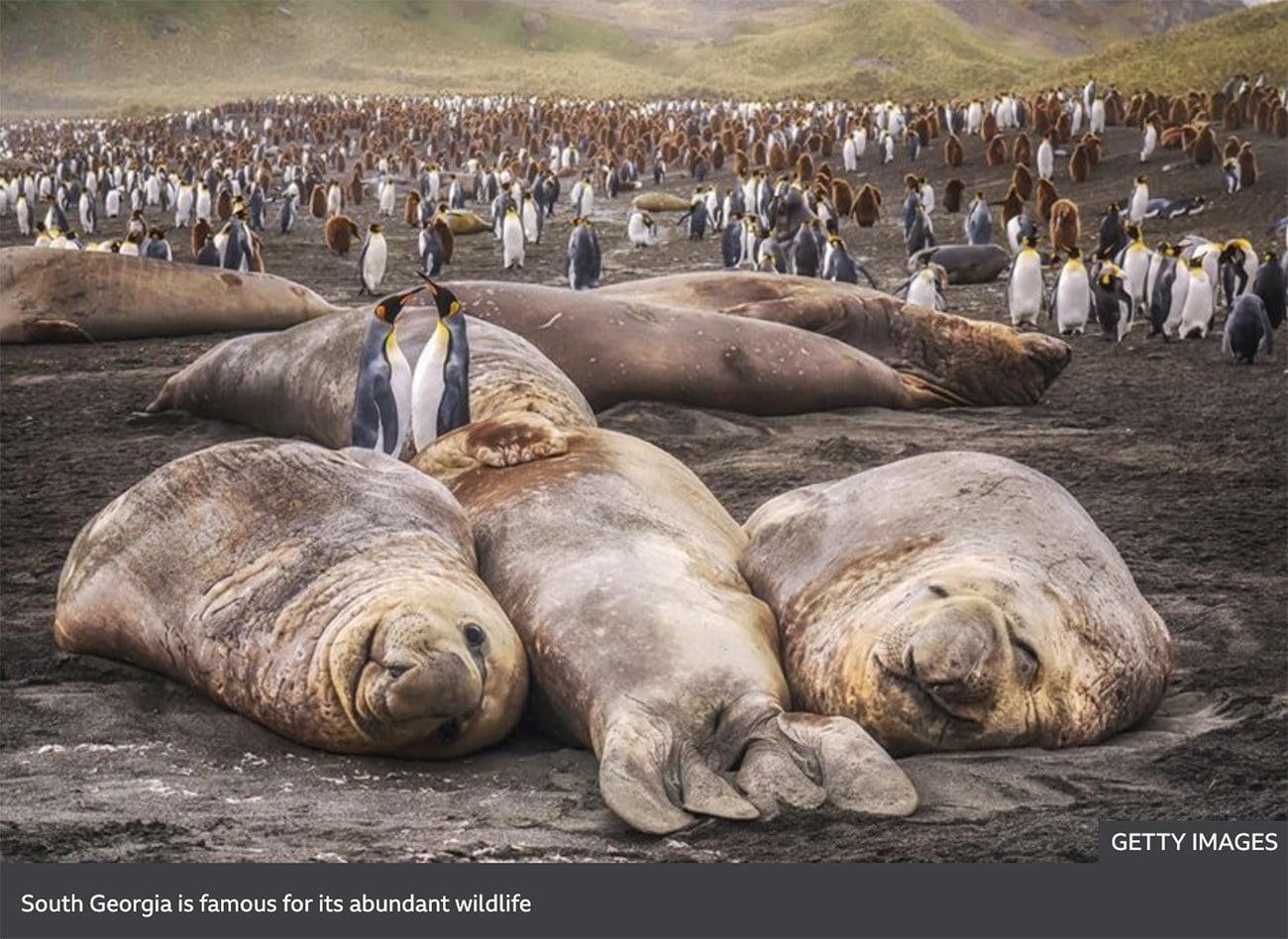 imagem de pinguins e focas na Geórgia do Sul