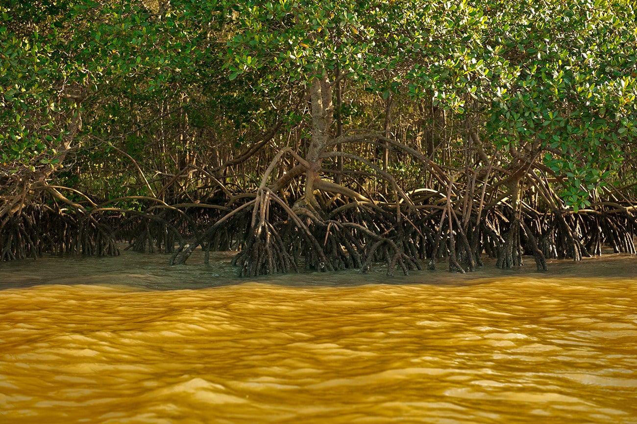 imagem de manguezal