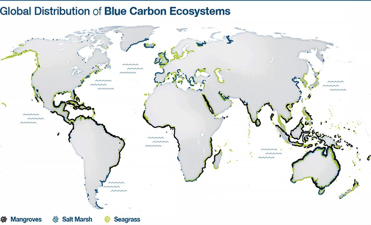 mapa da distribuição de ecossistemas de carbono azul pelo mundo