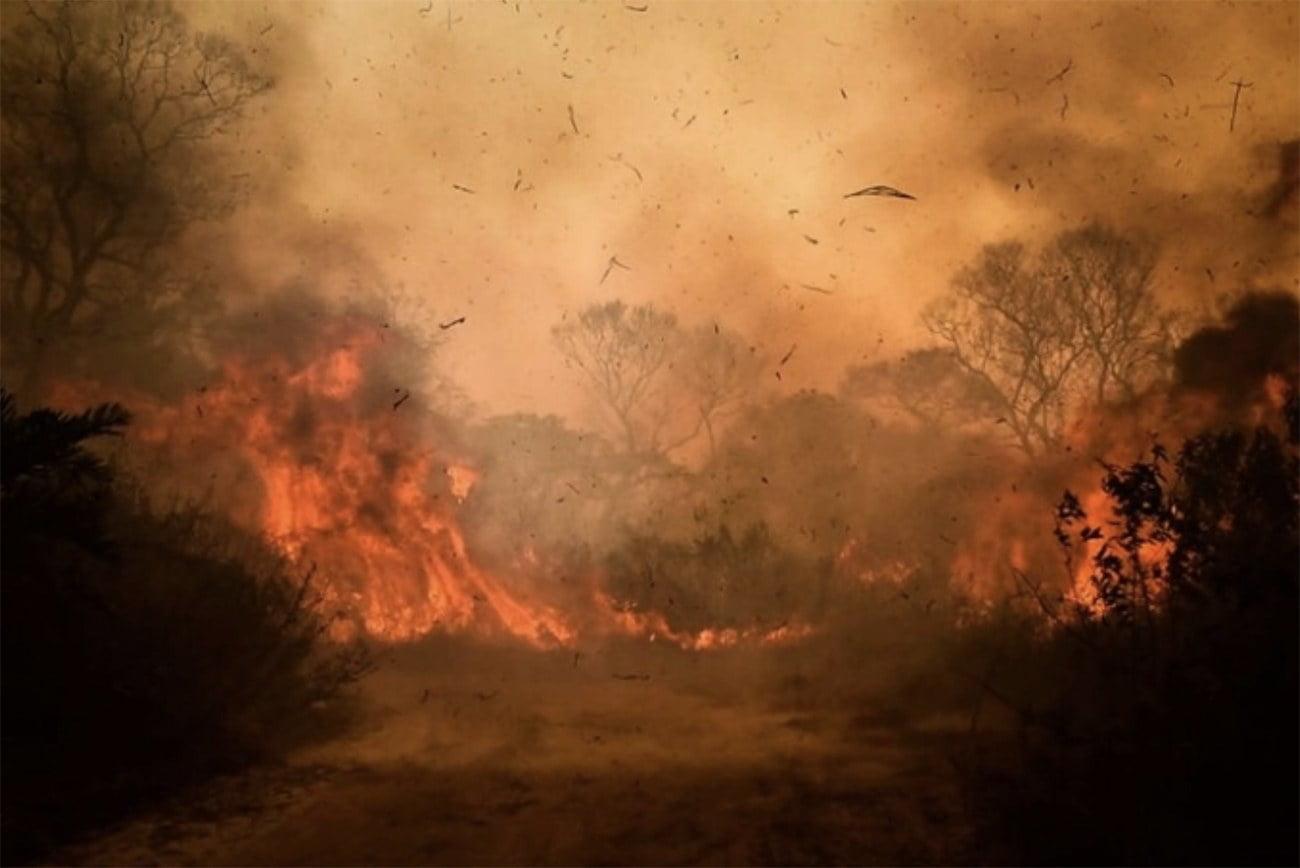imagem do Pantanal em chamas