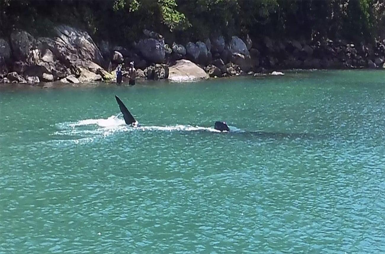imagem deão tubarão baleia
