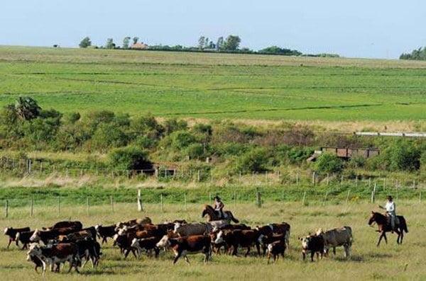 imagem do Pampa e gaúchos à cavalo