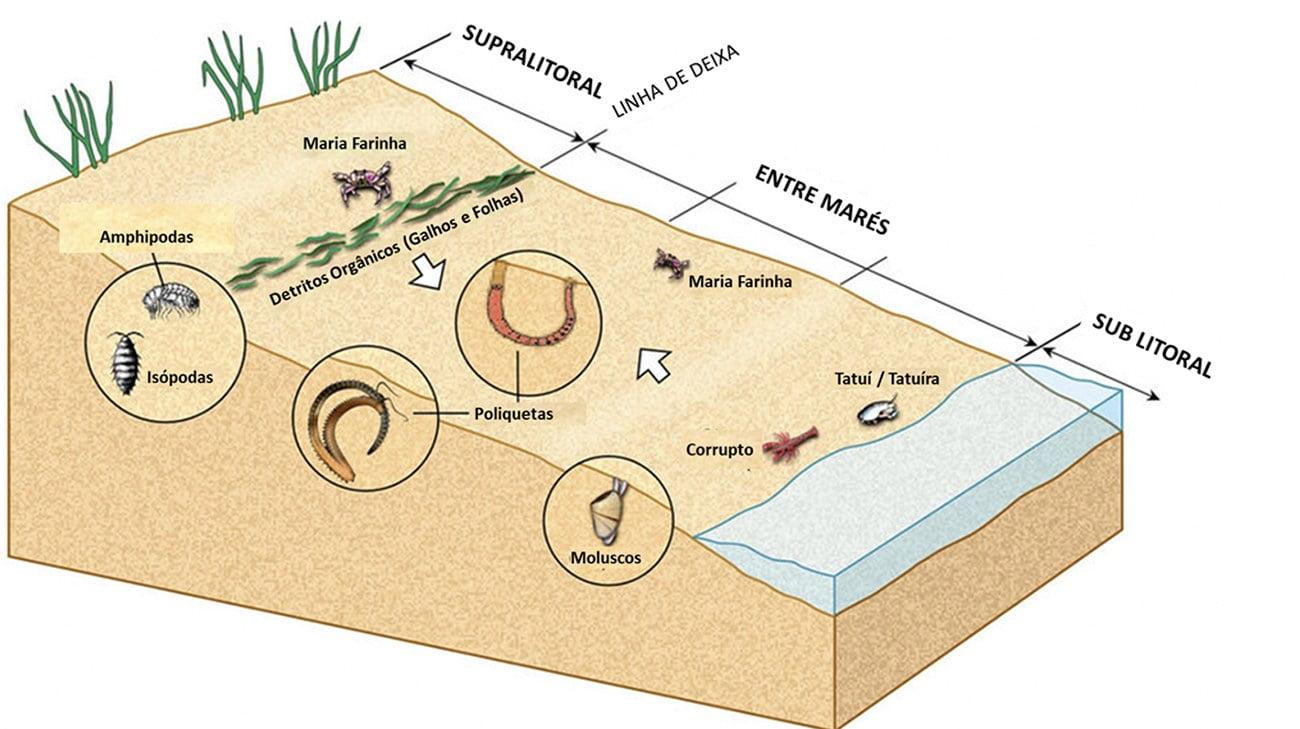 infográfico mostra areia da praia e a vida marinha