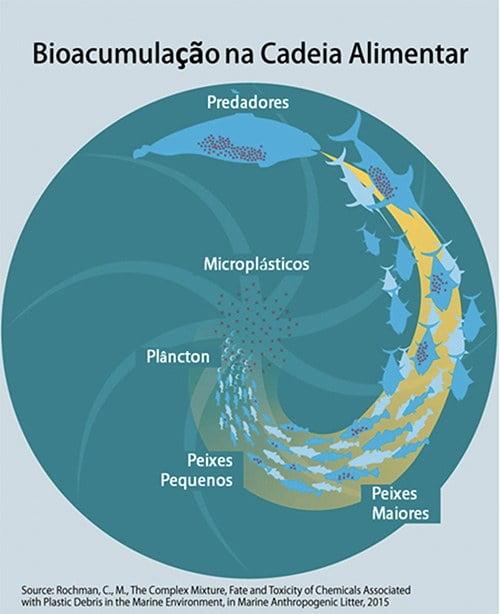 infográfico mostra bioacumulação entre microplásticso e a cadeia de vida marinha