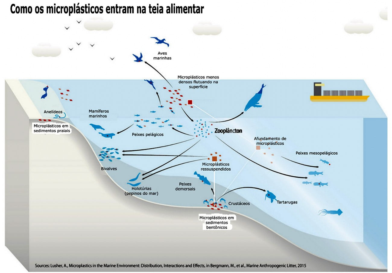infográfico mostra cadeia alimentar nos oceanos e microplásticos