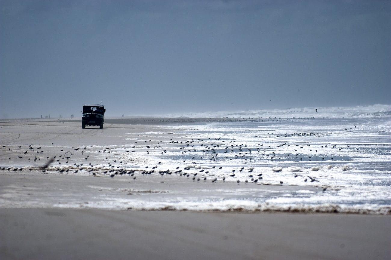 imagem de jeep na praia cheia de maçaricos