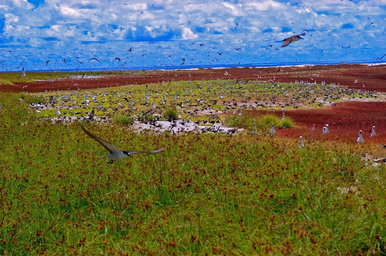 imagem de milhares de aves marinhas