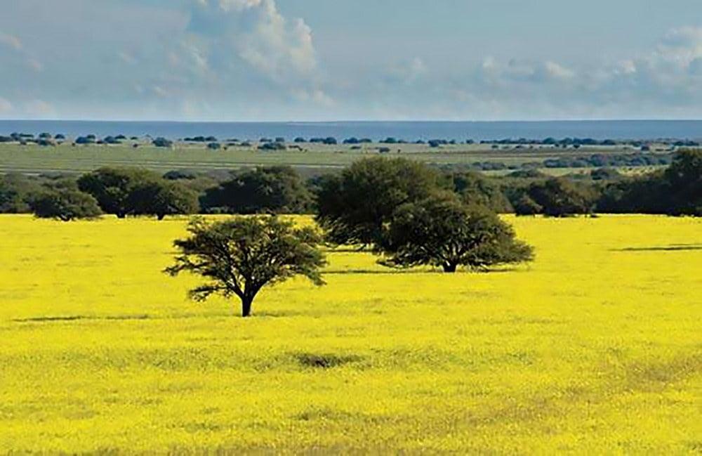 Imagem do bioma Pampa
