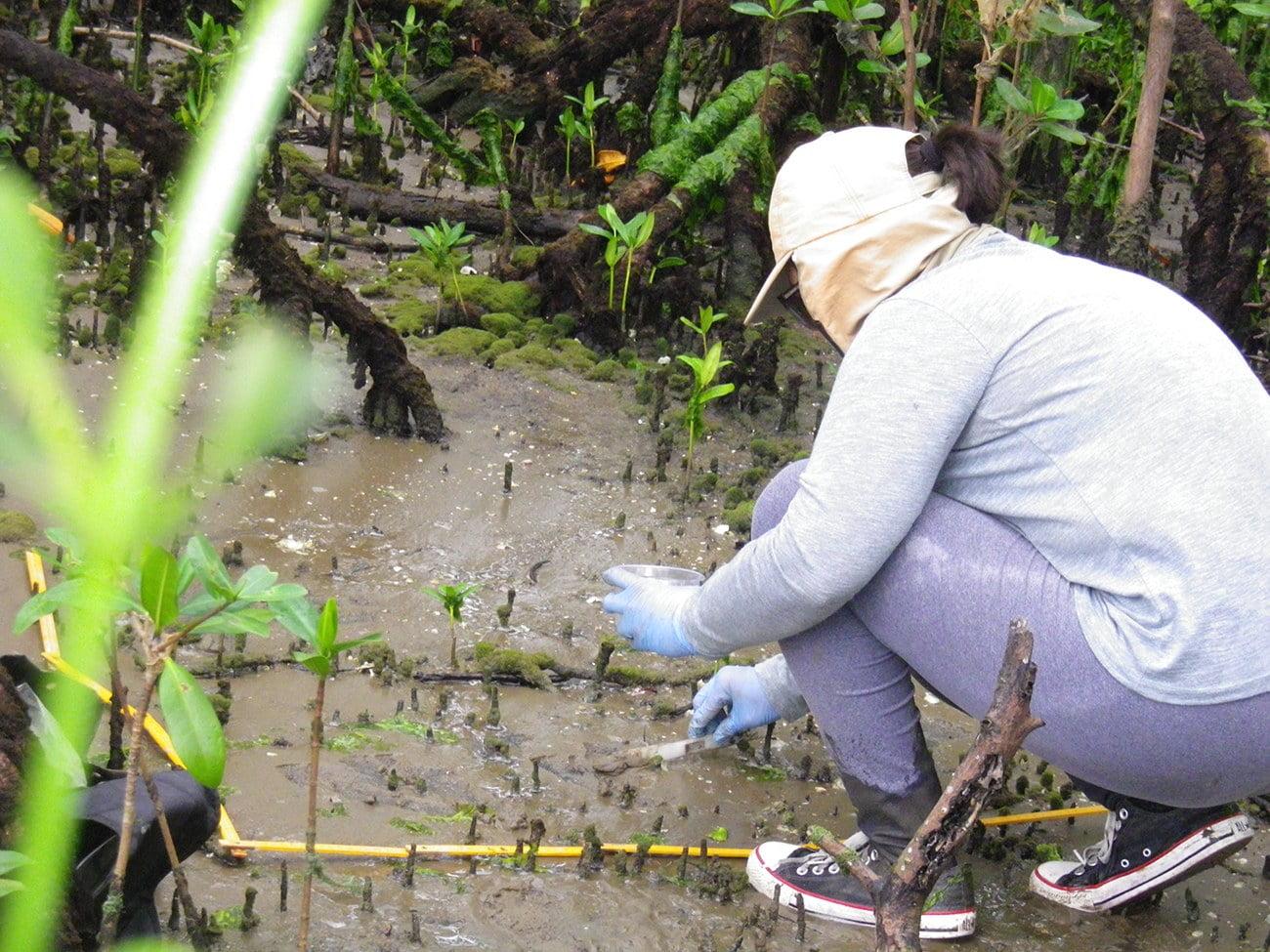 imagem de pesquisador da UFPR no manguezal da baía de Paranaguá