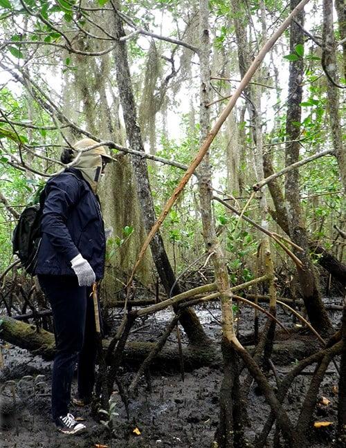 imagem de pesquisador da UFPR no manguezal