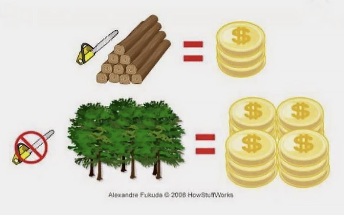 Ilustração mostra pagamento por serviços ambientais