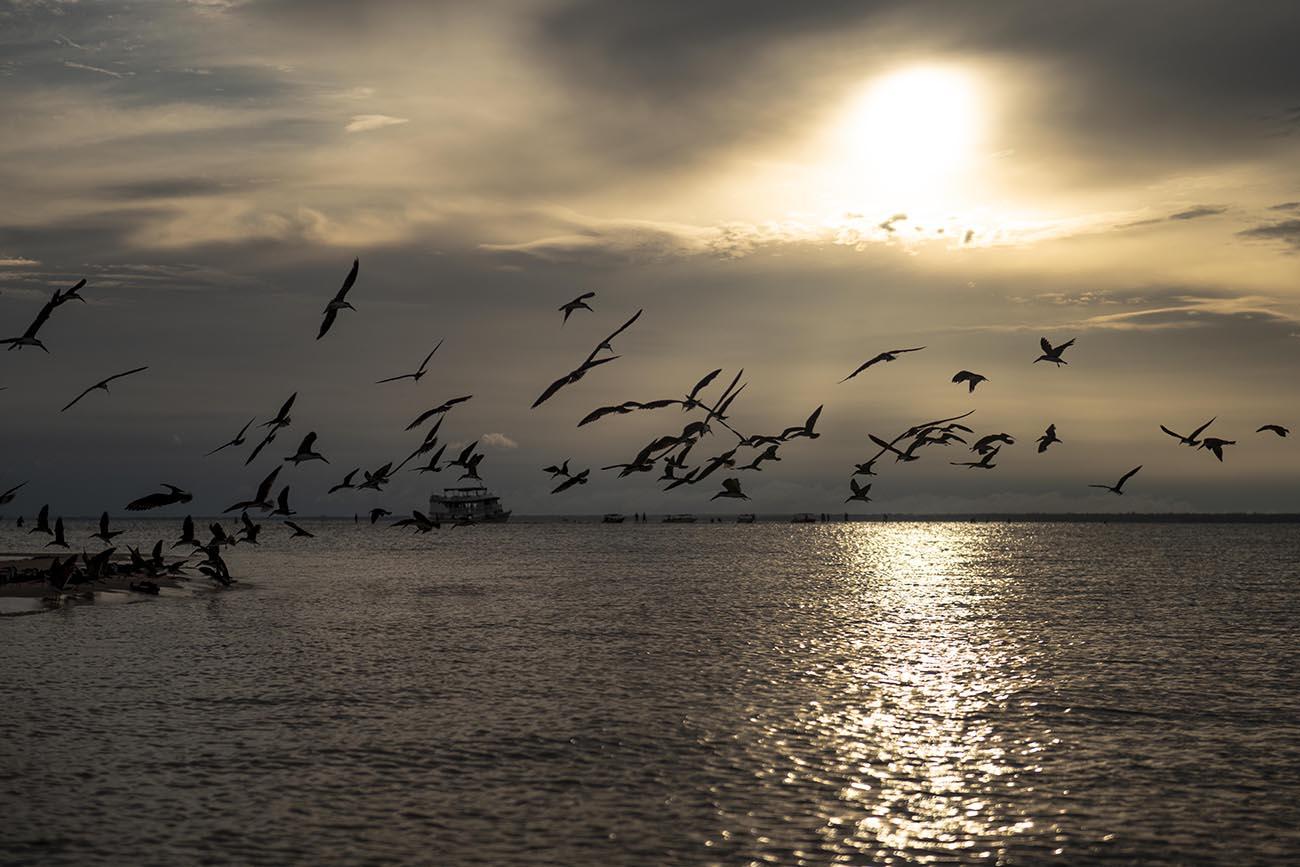 Imagem de talha-mares em voo