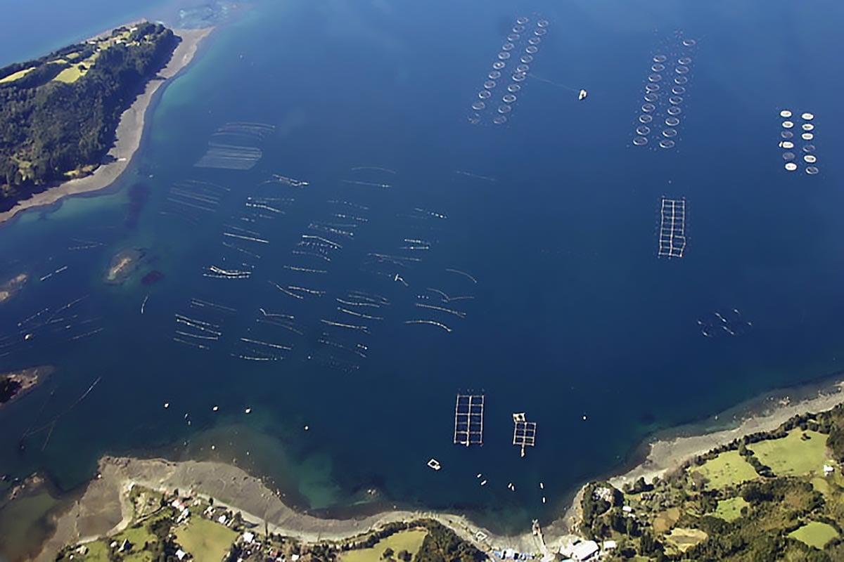 imagem de fazenda de salmão no Chile