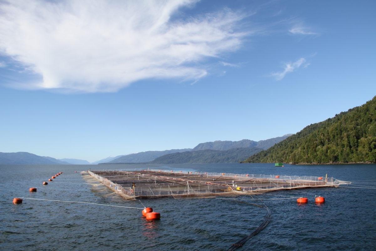 Imagem da indústria de salmões do Chile