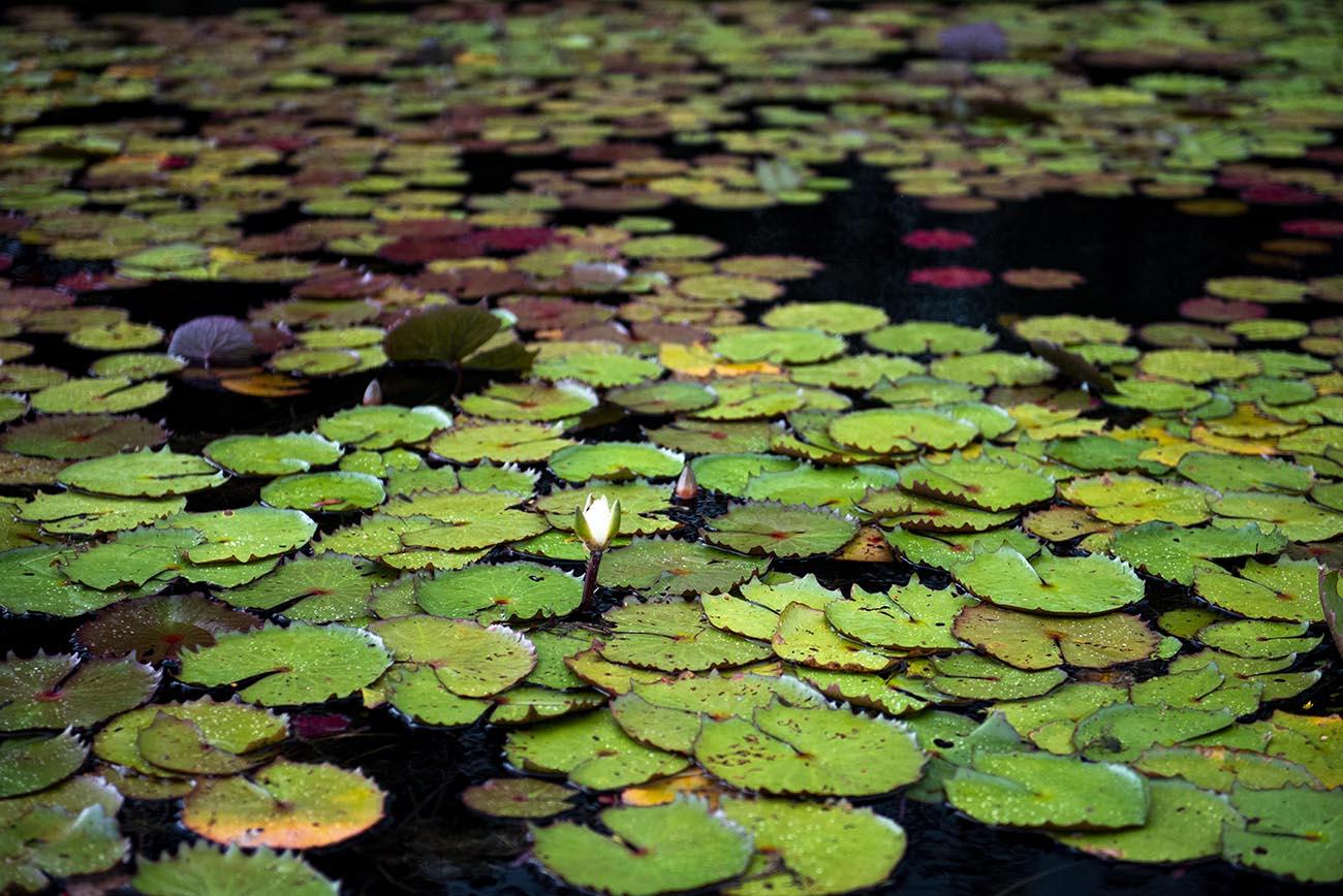 Imagem de vegetação em igarapé