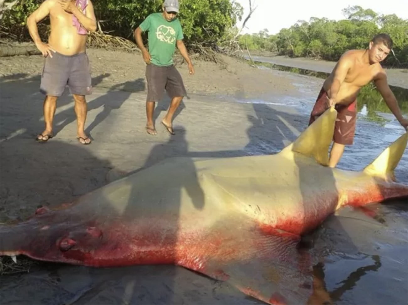 Imagem de peixe serra fisgado no Maranhão