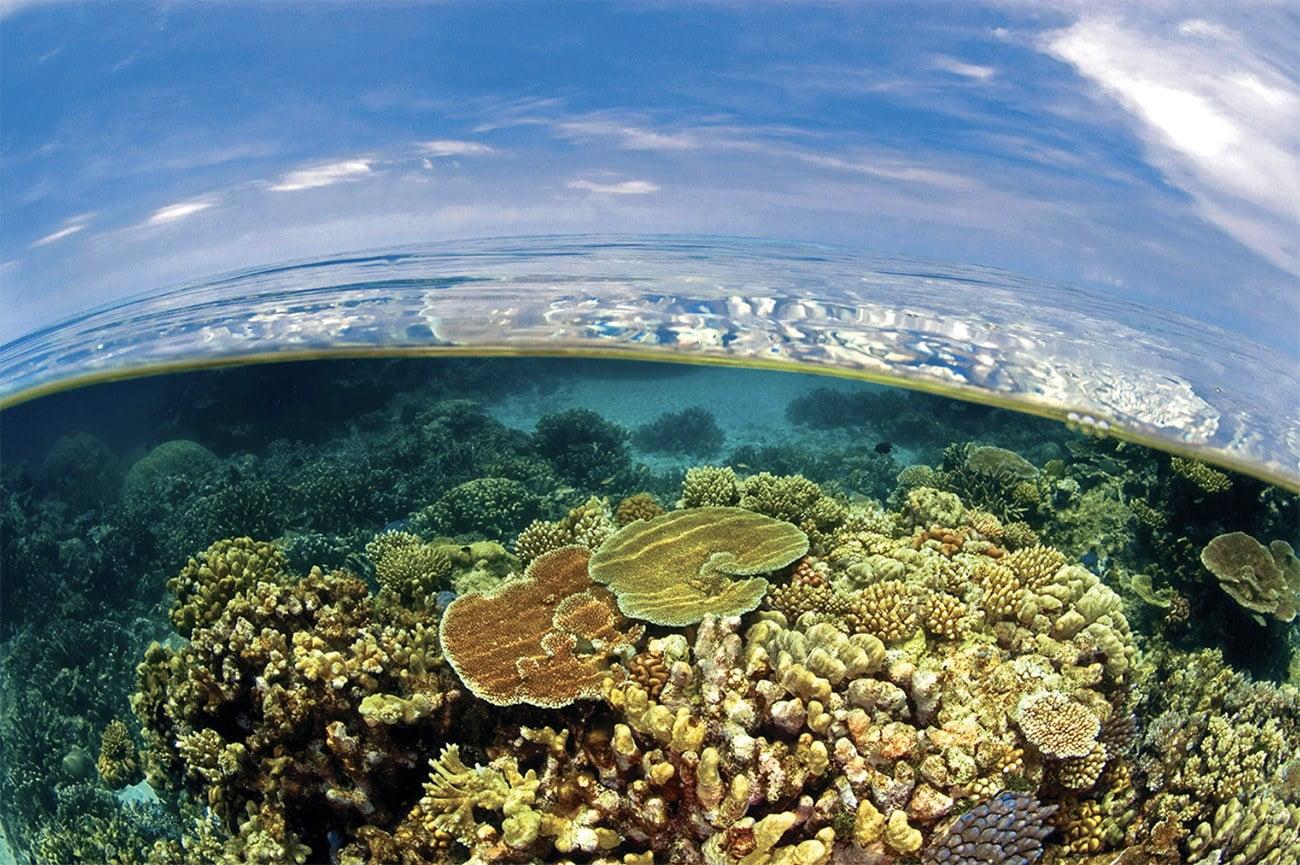 Imagem de acidificação do oceano