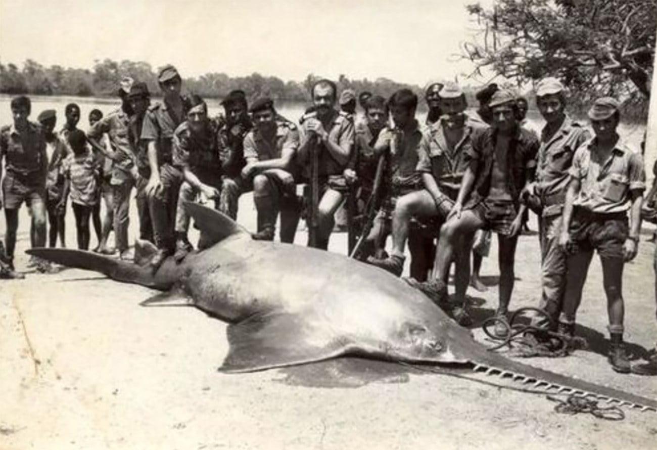 Imagem de grande peixe serra
