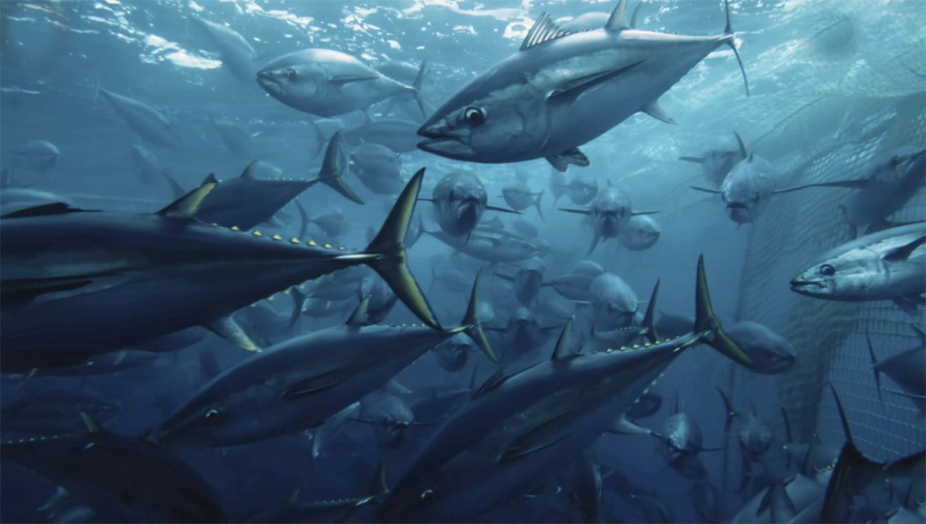 Imagem de cardume de atuns