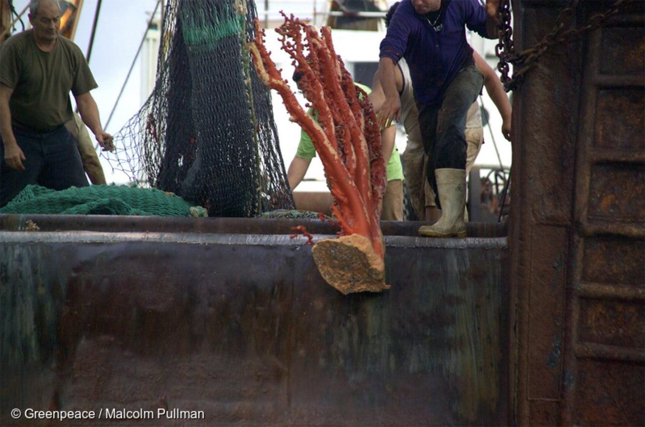 Imagem de coral pego no arrasto de fundo