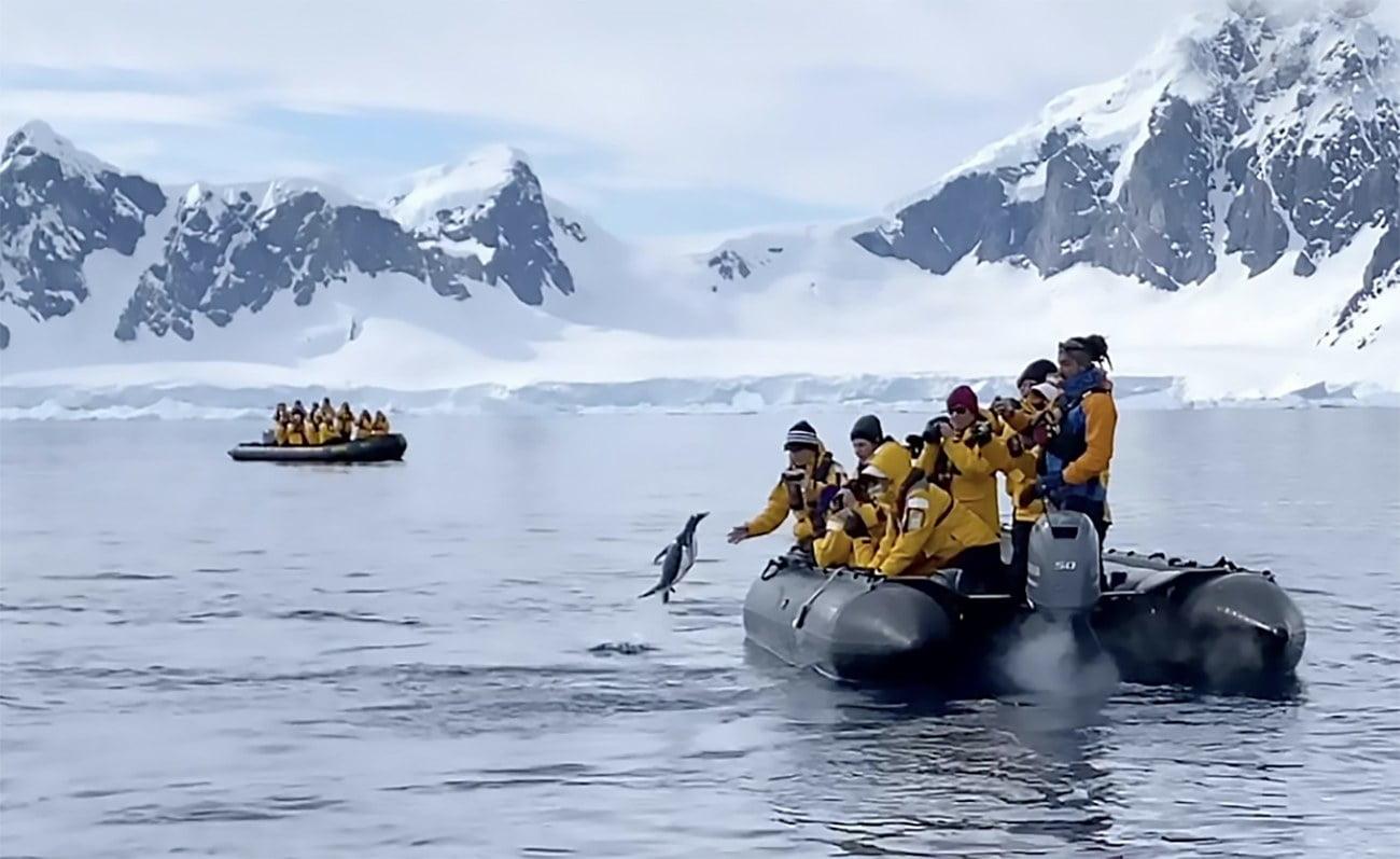 Iamgem de pinguim e bote de turistas na Antártica
