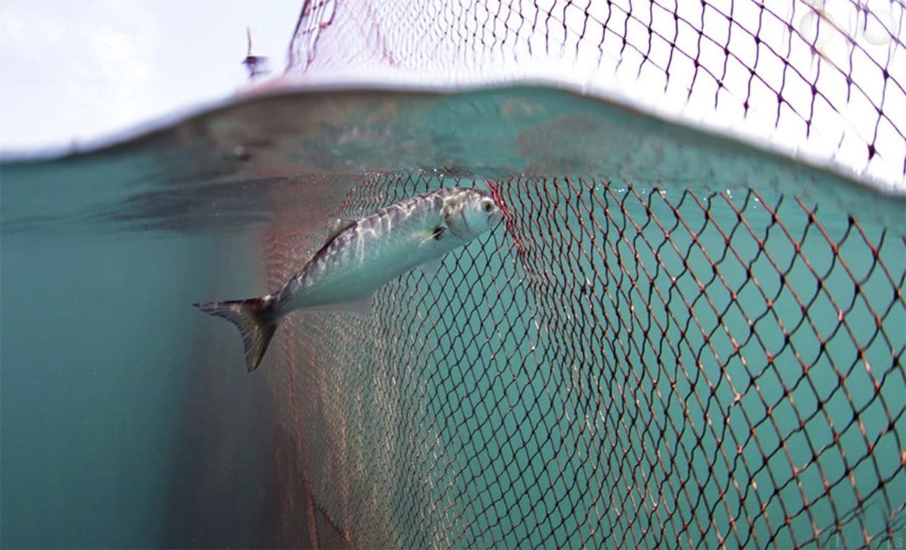 Imagem de rede de pesca
