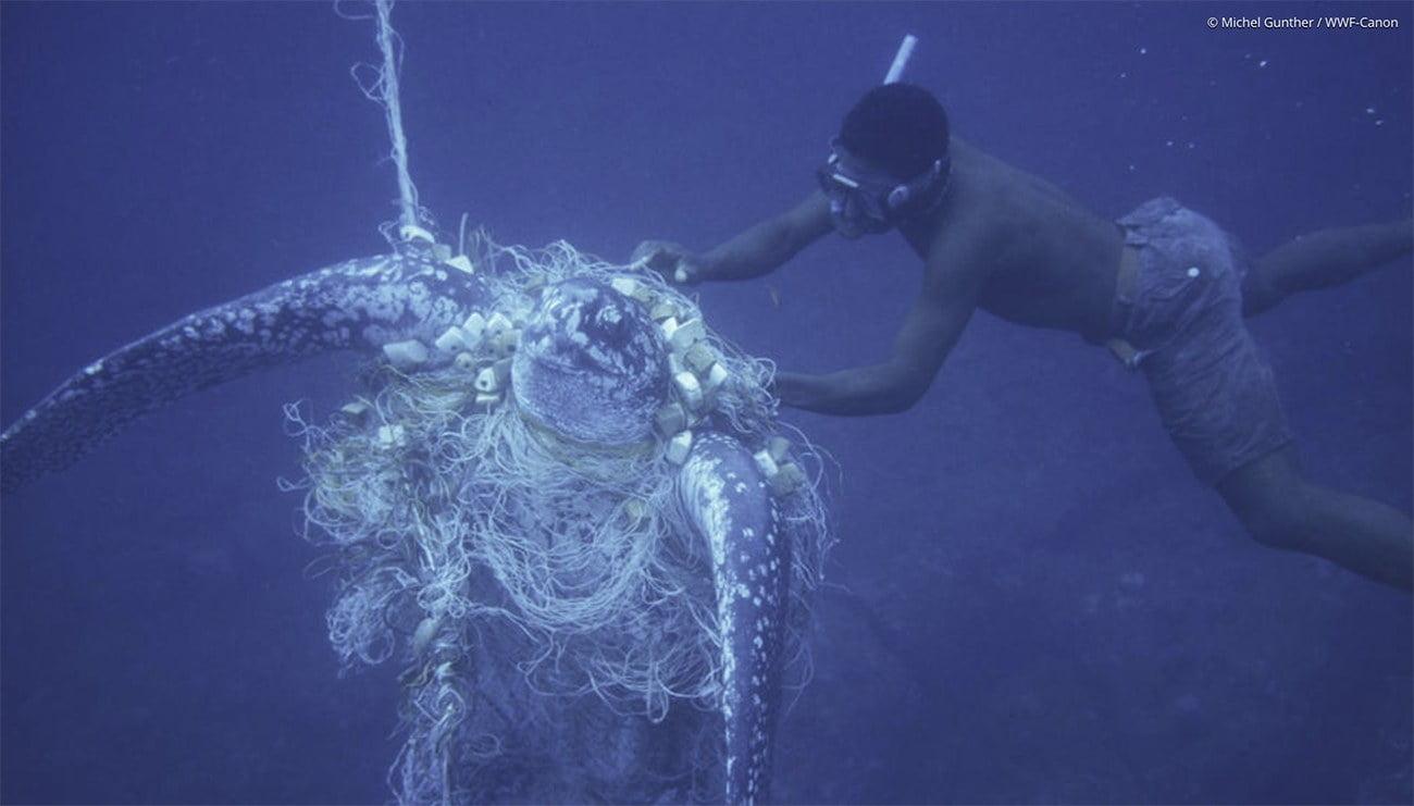 Imagem de tartaruga pega na pesca incidental