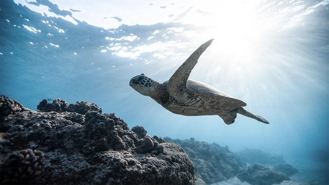 Imagem de tartaruga-marinha