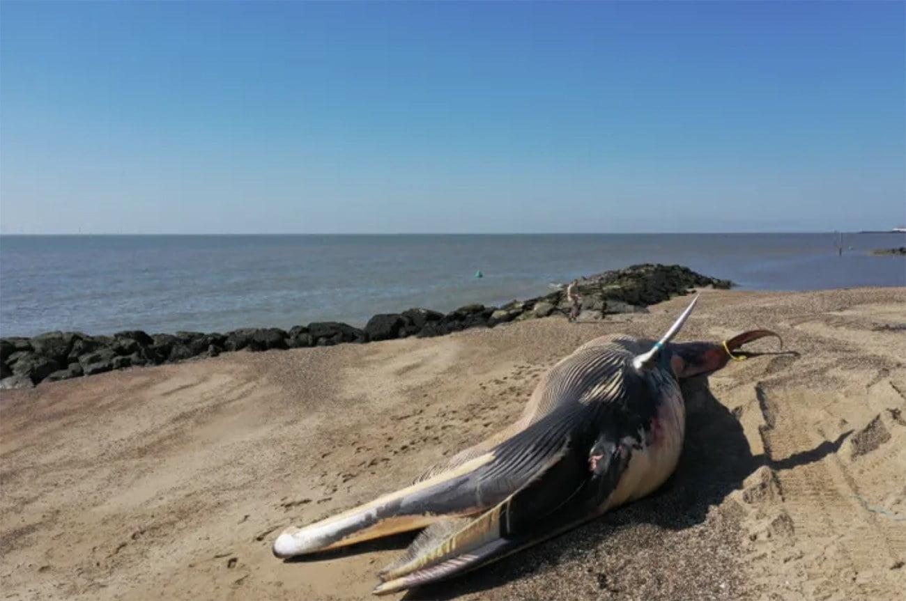 Imagem de baleia encalhada em praia