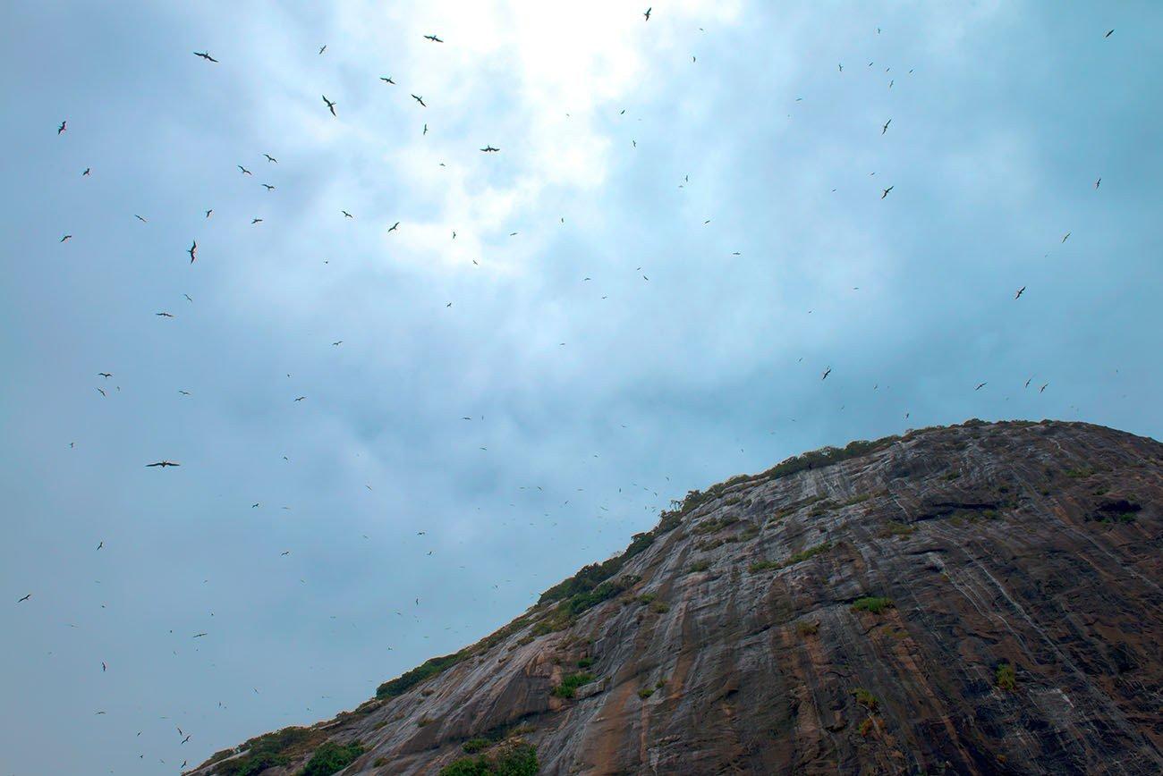 Imagem de fragatas na Ilha Redonda