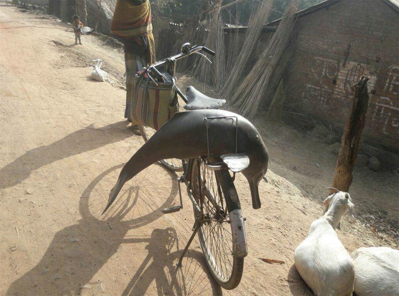 Imagem de golfino morto em garupa de bicicleta