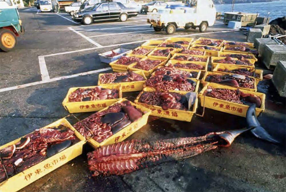 Imagem de Partes do corpo de pequenos cetáceos, Japão