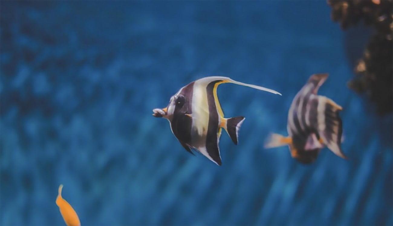 imagem de peixes tropicais