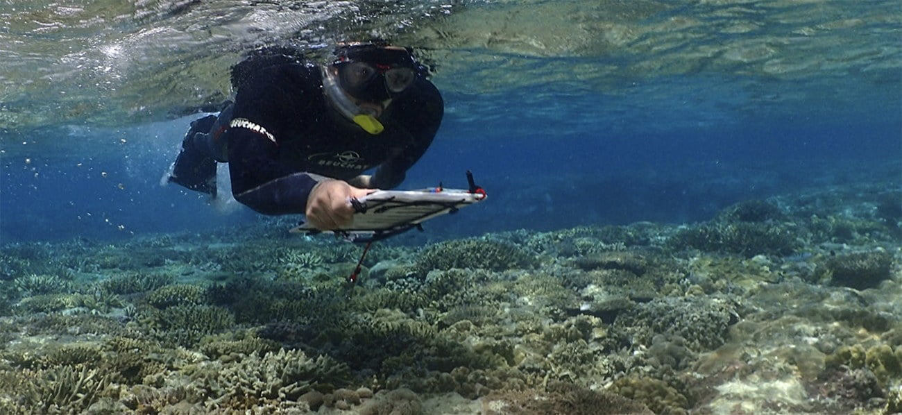 Imagem de pesquisador em recifes de corais rasos