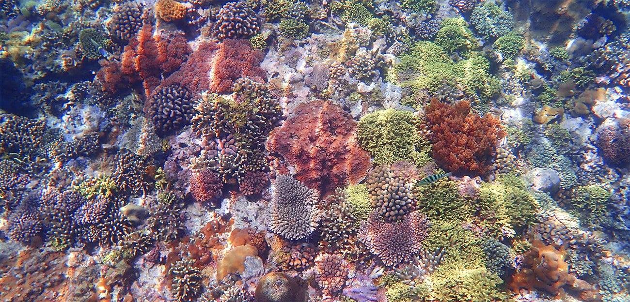 imagem de recifes de corais rasos