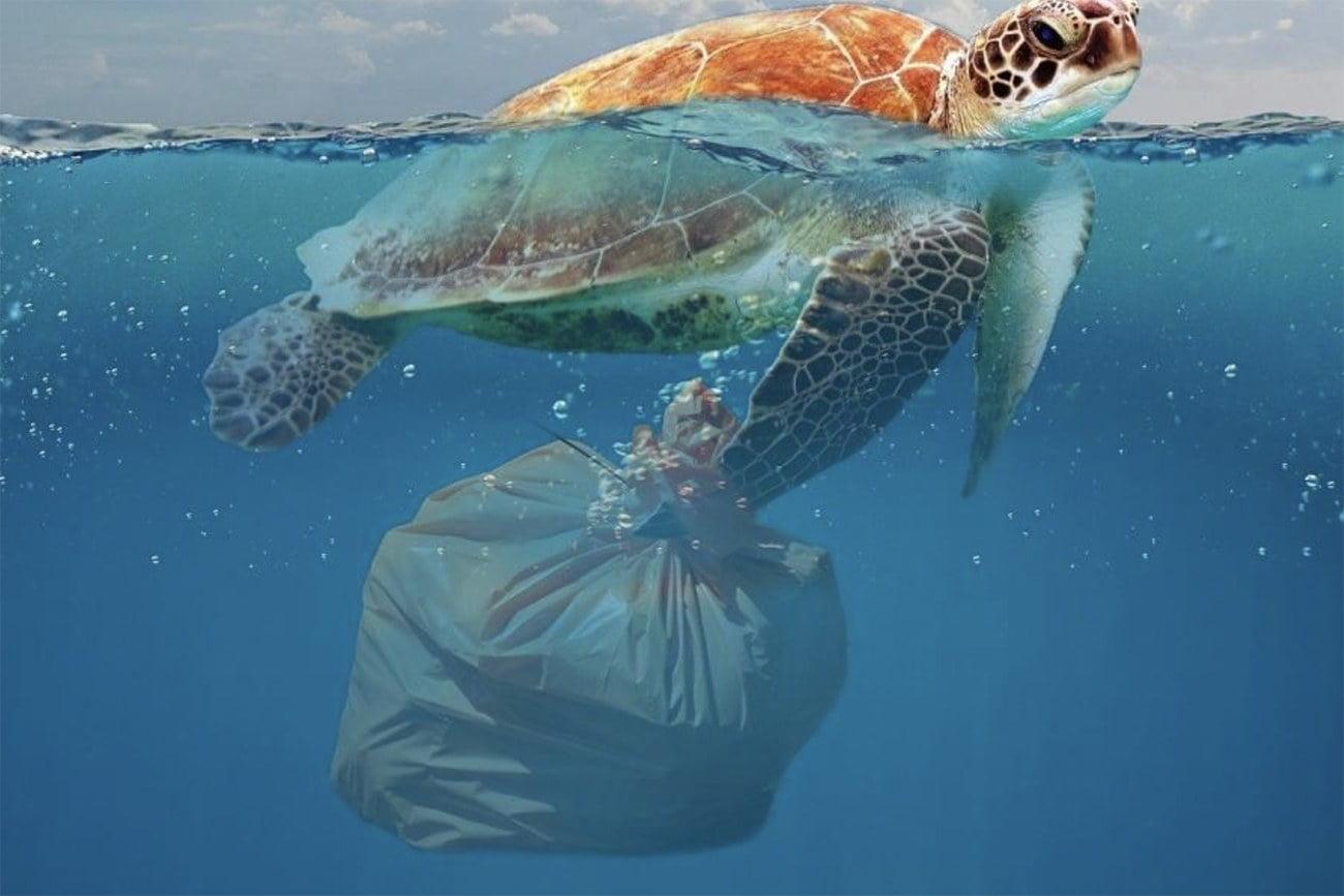 desenho de tartaruga marinha com saco plástico