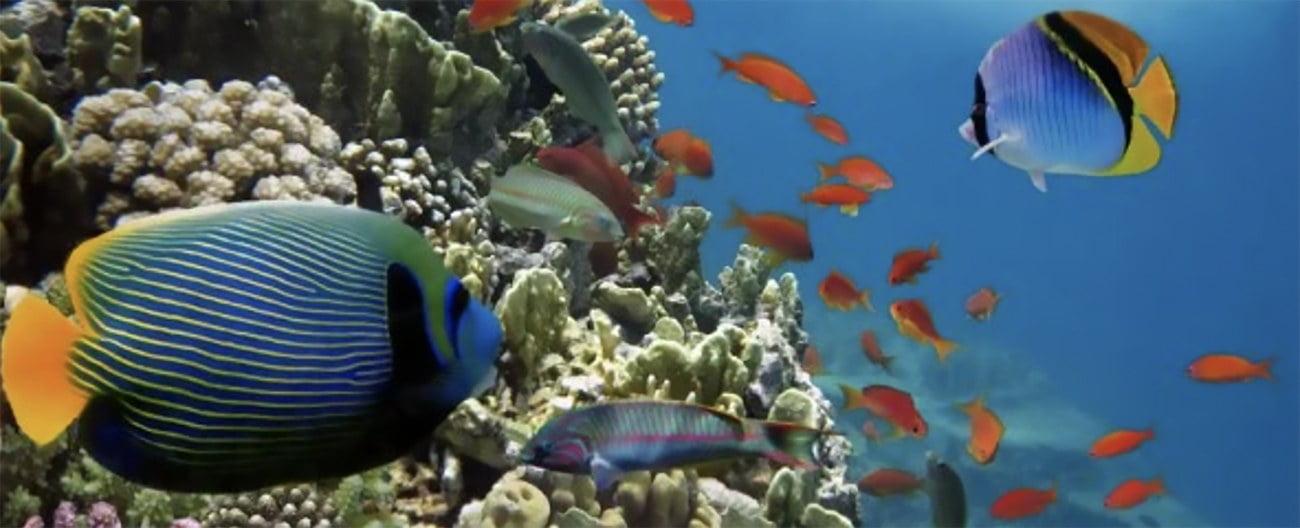 Imagem da vida marinha do equador