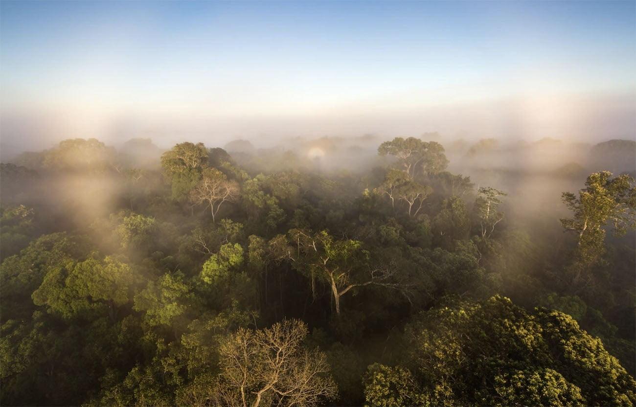 Imagem da floresta amazônica