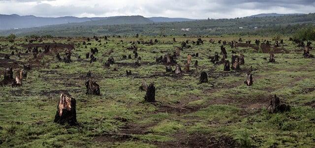 imagem de floresta desmatada