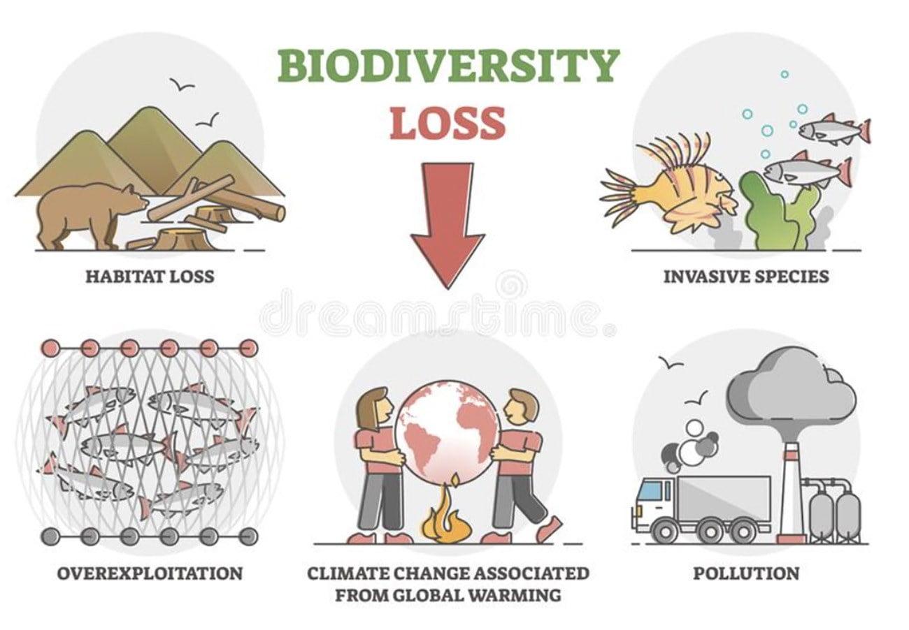 Infográfico mostra declínio da biodiversidade