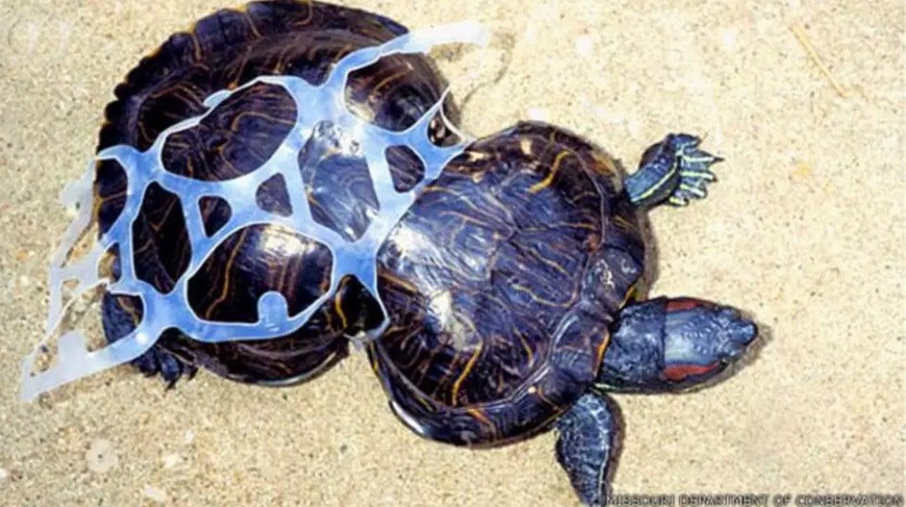 Imagem de tartaruga marinha deformada pelo plástico