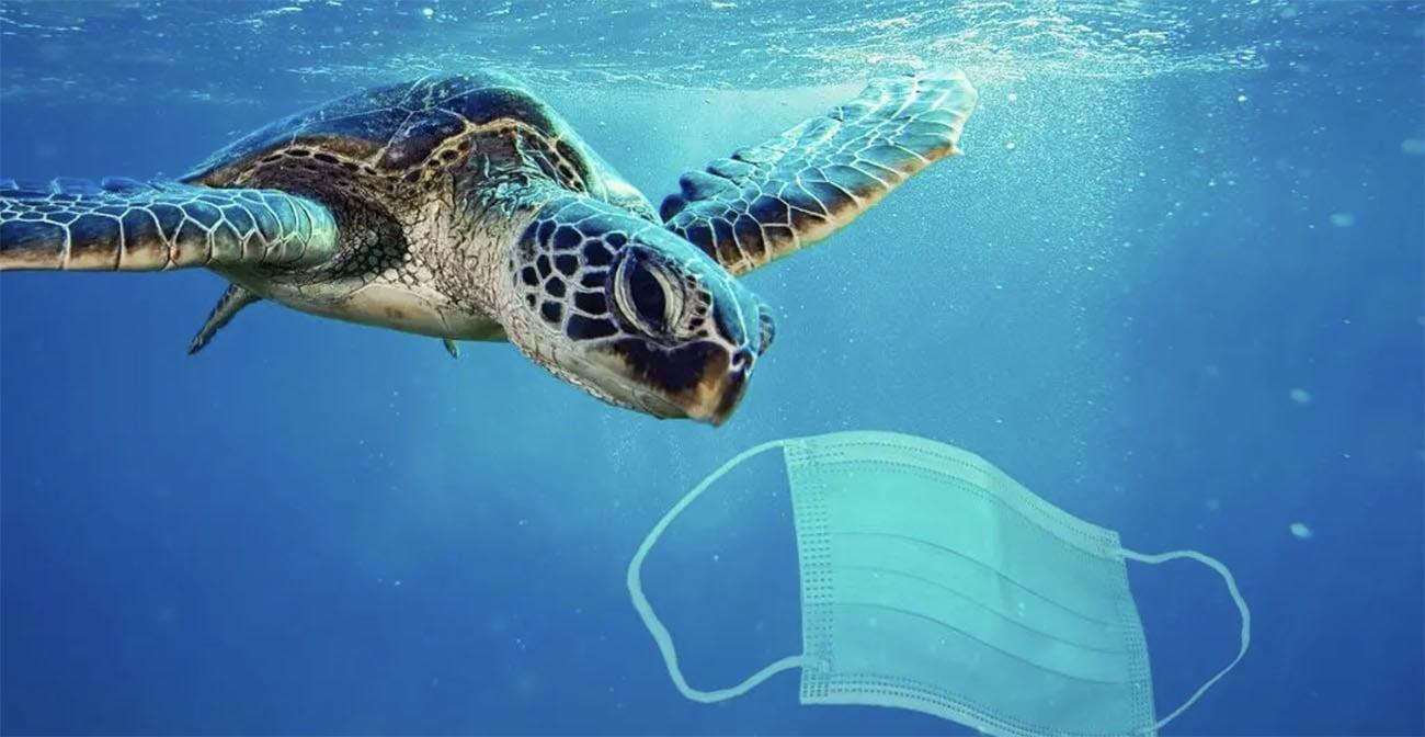 Imagem de tartaruga marinha e máscara facial
